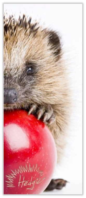 Hedgie Symbolism - Hedgehog holding an apple as Hedgie is holding Apple iPad