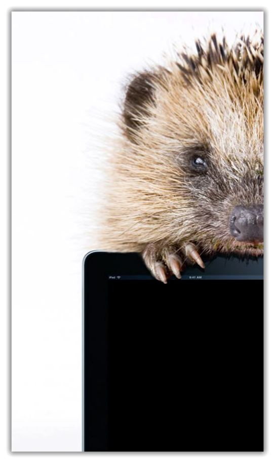 Hedgie - Hedgehog holding iPad with tweets of Hedgie4Ipad